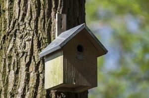 nest-box-2216749